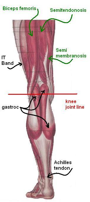 Knee Pain In Runners Part 1 A Quick Anatomy Lesson
